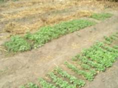 http://makeni.org.uk/blognews/2009/11/14/image004.jpg